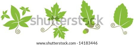 decorative leaves, vector illustration