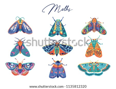 decorative moth collection in