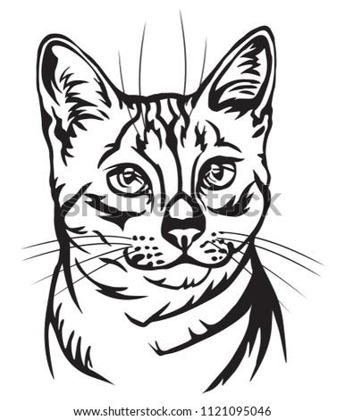 Lynx Sketch Bobcat Illustration Stock Photo 369816233