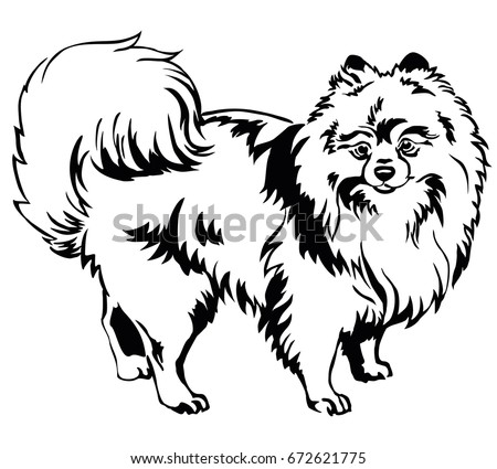 decorative portrait of standing in profile dog breed spitz pomeranian vector isolated illustration