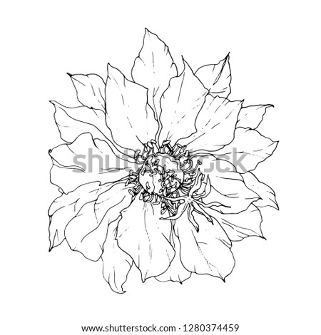 Decorative tropical cactus flower blossom. Vector botanical illustration: retro, vintage, hand drawn, black and white, outline, exotic. For wedding print, invitation, card. Japanese style. Tattoo.