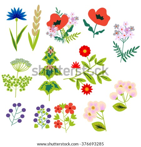 decorative vector floral