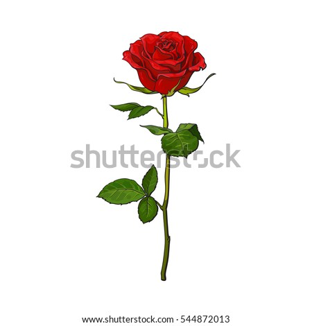 deep red  ruby rose flower with