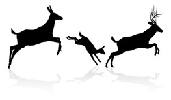 Deer animal silhouettes. Fawn, doe and buck stag running and jumping together