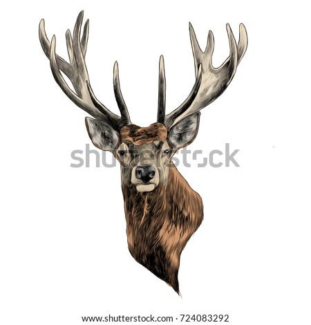 deer deer sketch vector