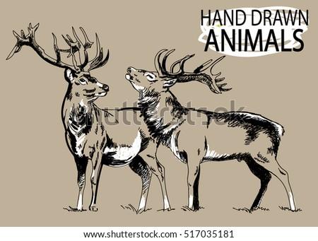 deer drawing by hand in