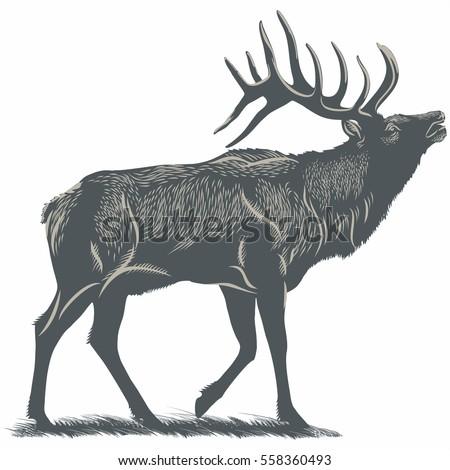 Deer, Elk on the grass, illustration, vector