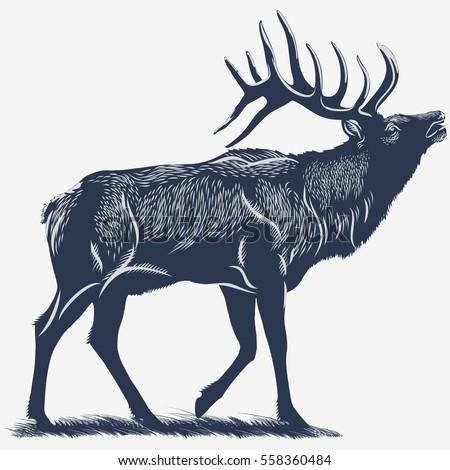 Deer, Elk on the grass, in the blue color, illustration, vector