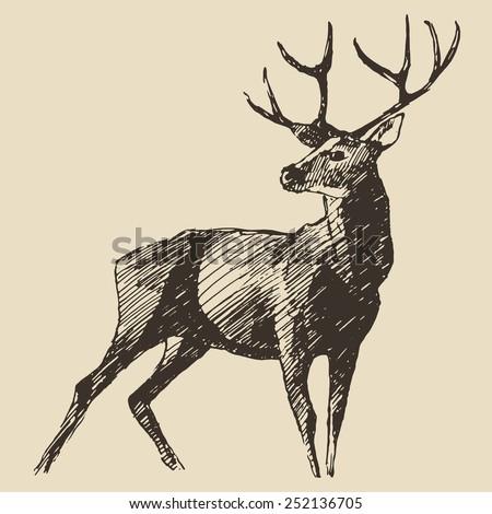 deer engraving style  vintage