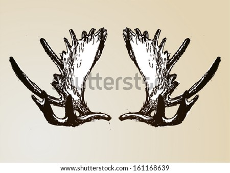 deer horns on the wall vector