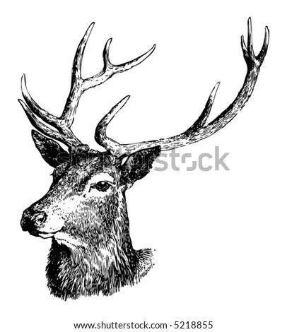Deer illustration black and white - photo#23