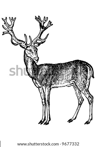 Royalty Free Stock Photography Deer Head Image16285667 also Alfmaler additionally 340866032 Shutterstock Deer Skull With Dream Catcher Vector furthermore 350665733 Shutterstock Hunting And Fishing Vintage Emblem likewise Stock Illustration Vector Deer Antlers Silhouette Isolated White Set Different Large Branched Acute Image54986303. on deer antler animation