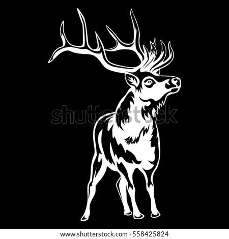 deer isolated on black
