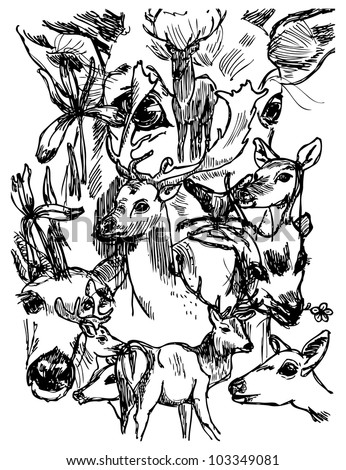 Deer sketch in vector