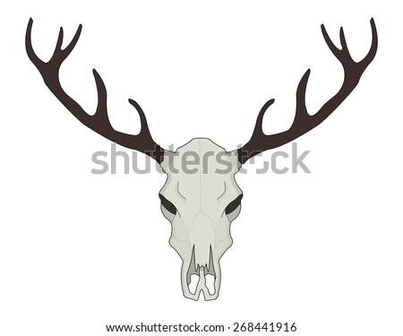 deer skull vector - download free vector art, stock graphics & images