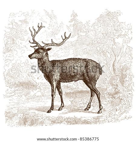 deer   vintage engraved...