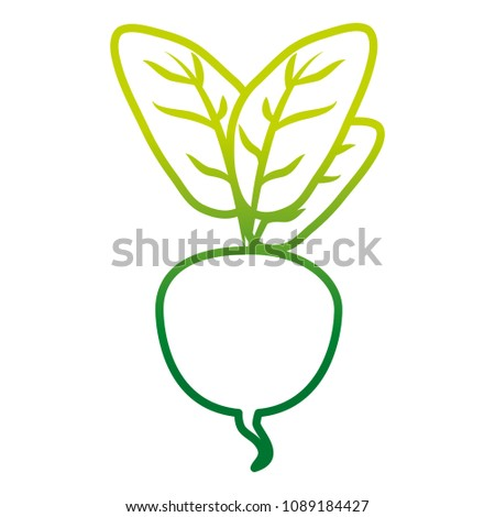 degraded line natural beet with leaves organic vegetable