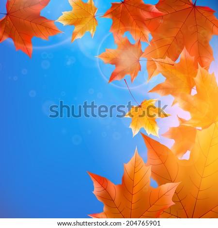 delicate autumn sun with glare
