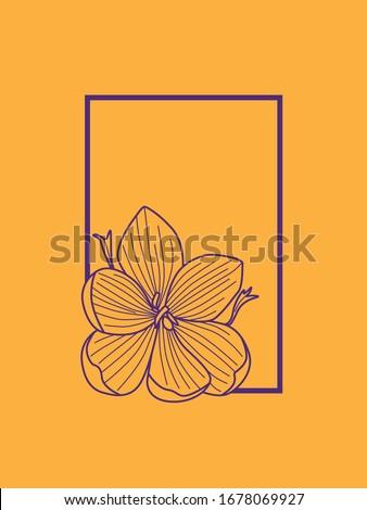 delicate purple crocus flower