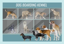 Demonstration of different breeds of hunting dogs in a dog boarding kennel. Vector illustration in realistic style