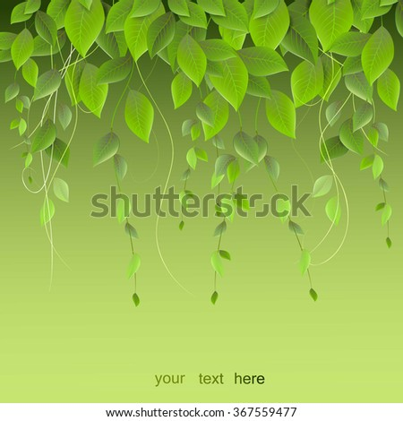 dense foliage hanging on a
