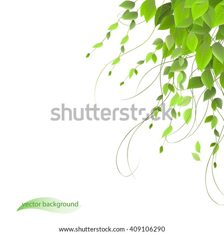 dense foliage on a white