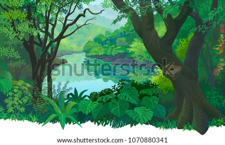dense  green tropical forest
