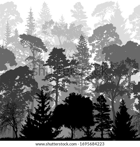 dense pine and spruce forest