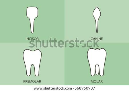 dental cartoon vector  tooth...