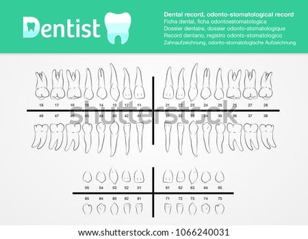Dental record, odonto-stomatological record listed with number, vector, for dentist and clinics. profesional use.