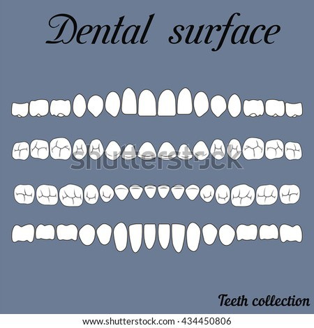 Dental Surface Upper And Lower Jaw The Chewing Surface Of Teeth