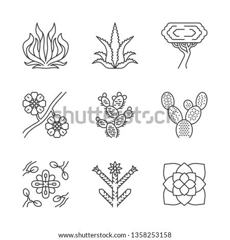 Desert plants linear icons set. Exotic flora. American succulents. Larrea, palo verde tree, aloe vera, agave. Thin line contour symbols. Isolated vector outline illustrations. Editable stroke #1358253158