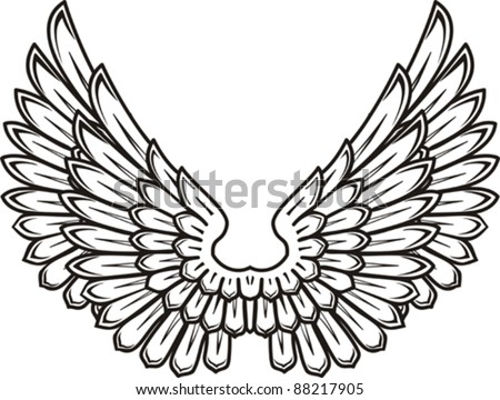 Detailed bird wings isolated on White background. Vector illustration