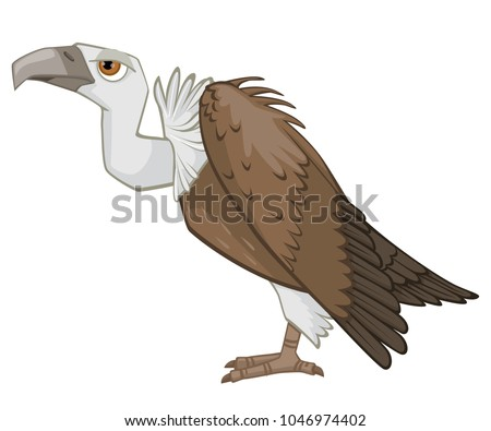 Detailed Cartoon Vulture Vector Illustration Isolated on White