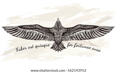 detailed hand drawn eagle for