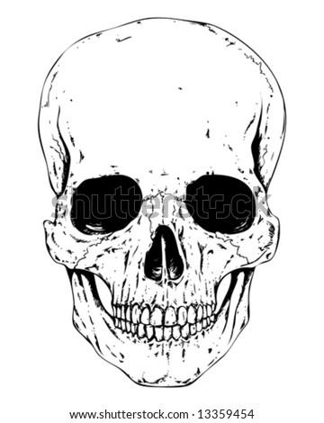 detailed human skull vector