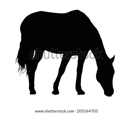 detailed portrait silhouette of