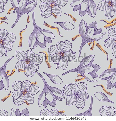 detailed purple crocus flowers