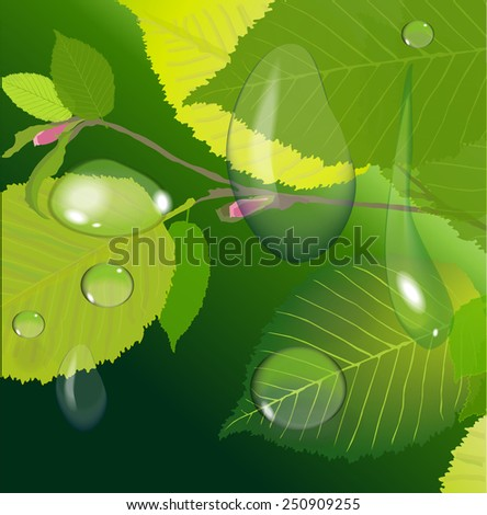 dew drops on leaves background