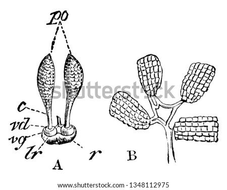 diagram of different parts of