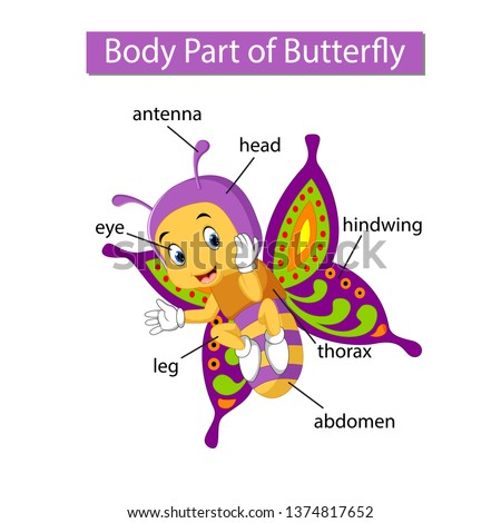 diagram showing body part of