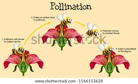 Diagram showing pollination with bee and flowers illustration Stock photo ©