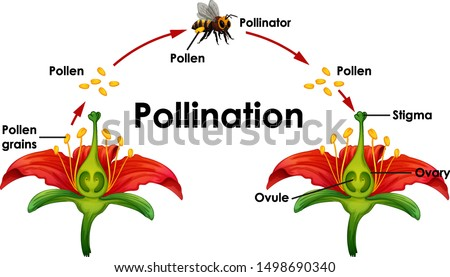 Diagram showing pollination with flower and bee illustration Stock photo ©