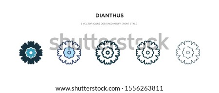 dianthus icon in different