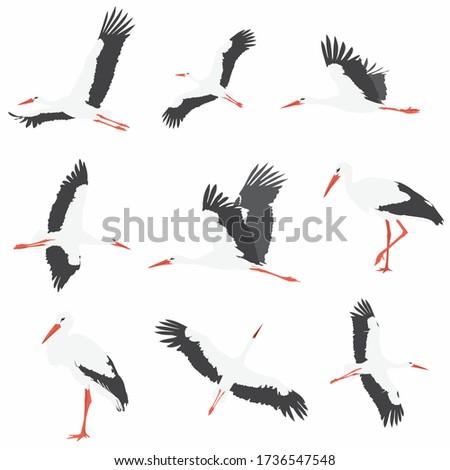 Different cartoon storks set. Simple flat vector illustration Foto d'archivio ©
