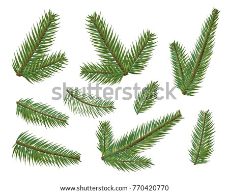 different christmas tree branches set christmas elements tree clipart - Christmas Tree Branches