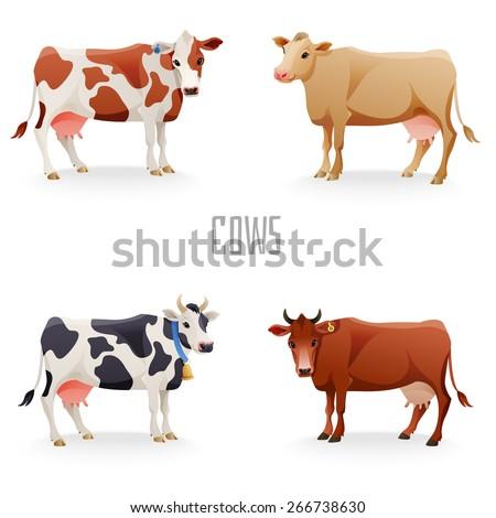 different cows colors set