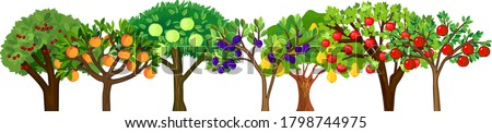 different fruit trees with ripe