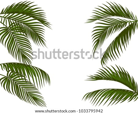 Different in form tropical dark green palm leaves. Isolated on white background without a mesh and gradient. Vector illustration