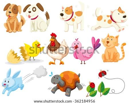 Different kind of domestic animals illustration